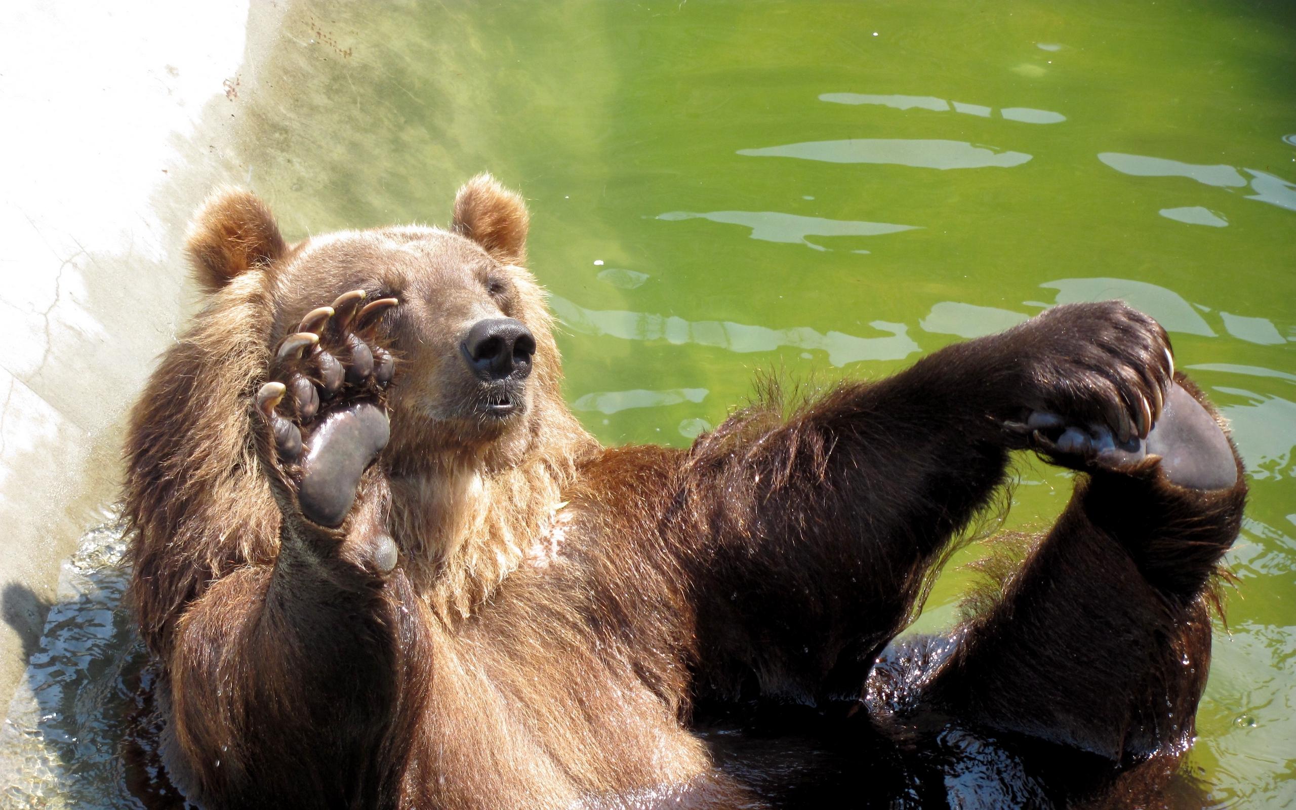 Значение татуировки Медведь
